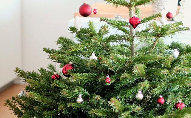 Weihnachtsbaum im topf mieten bern